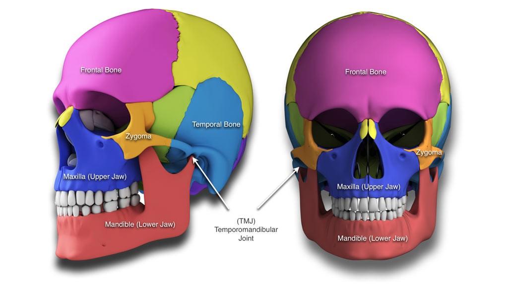 facial fractures trauma, maxillofacial (jaw)