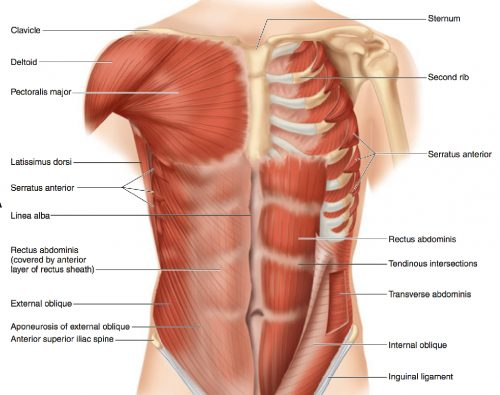 microsurgery-Rectus-abdominus-muscle-flap